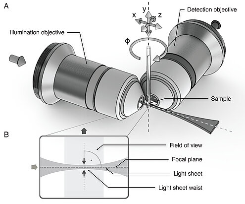 The basic principle of light-sheet microscopy